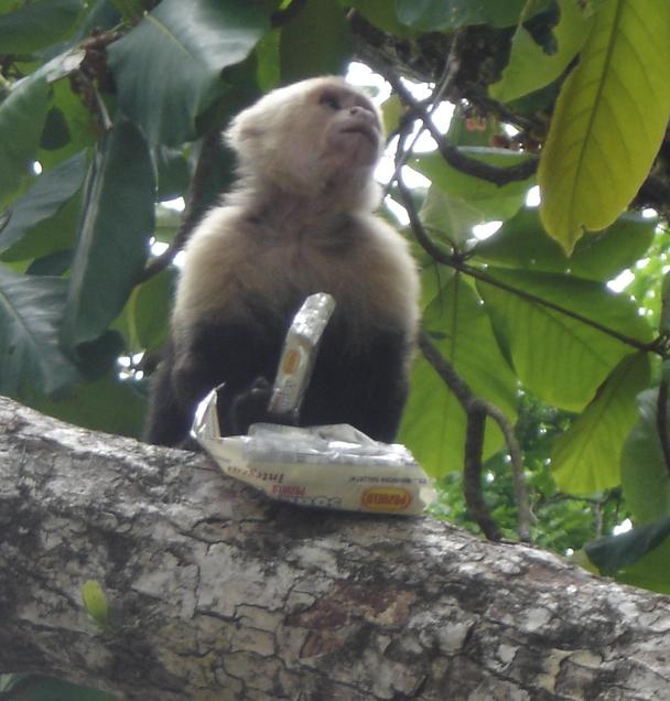 Turistas y tecnología que matan lentamente la Vida Silvestre del Parque Nacional Manuel Antonio (4/4)