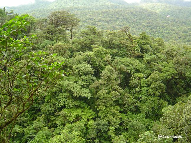 Cambios en la vegetación y el ciclo del agua en Mesoamérica en el siglo XXI a causa del Cambio Climático