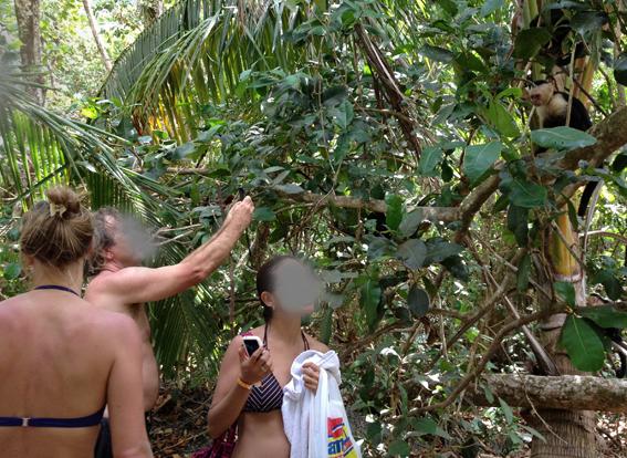 Turistas y tecnología que matan lentamente la Vida Silvestre del Parque Nacional Manuel Antonio (2/4)