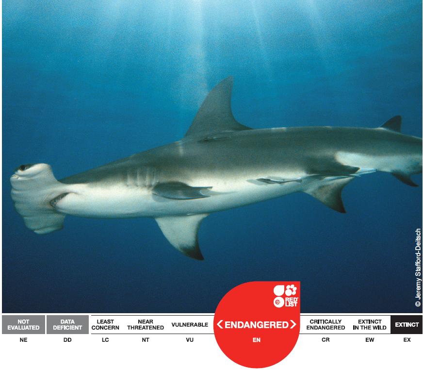 ¿Como vamos a conservar los tiburones sino sabemos cuantos mueren anualmente? (1/6)